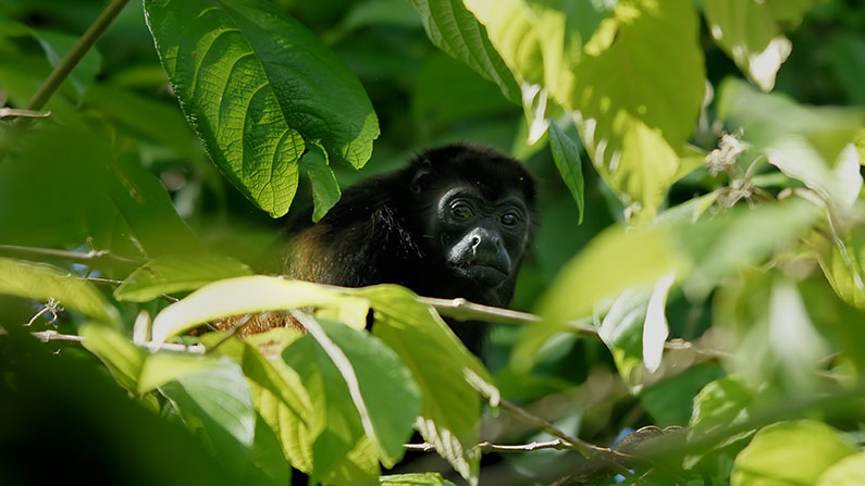 Monkey Costa Rica Vacation Packages