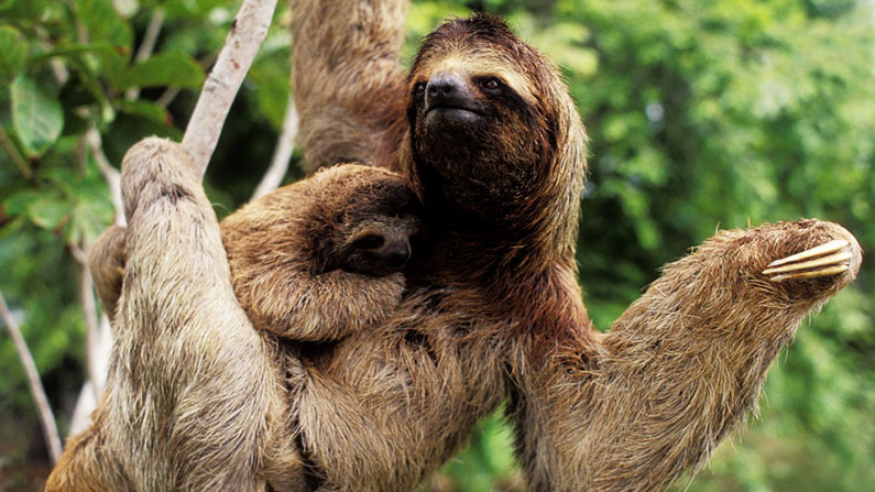 Sloth Costa Rica Vacation Packages
